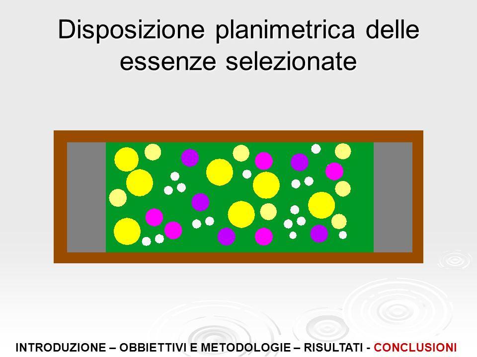 Disposizione planimetrica delle essenze selezionate