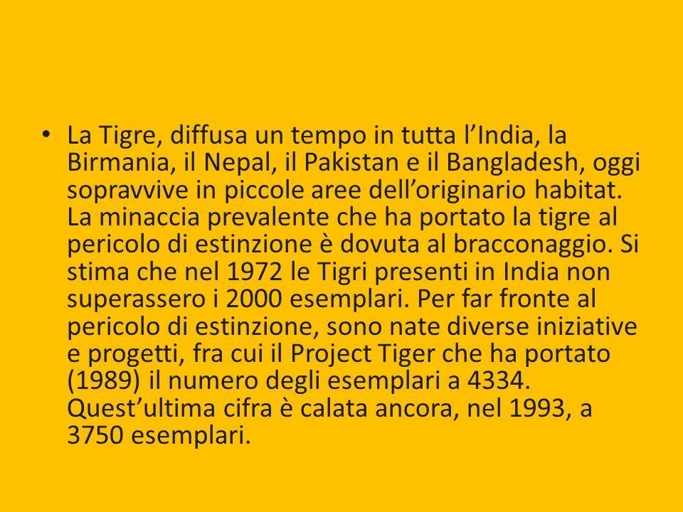 La Tigre, diffusa un tempo in tutta l'India, la Birmania, il Nepal, il Pakistan e il Bangladesh, oggi sopravvive in piccole aree dell'originario habitat.