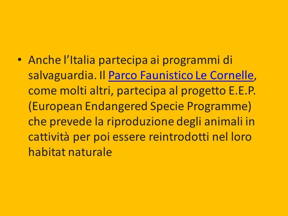 Anche l'Italia partecipa ai programmi di salvaguardia