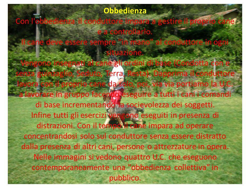 Obbedienza Con l obbedienza il conduttore impara a gestire il proprio cane e a controllarlo.