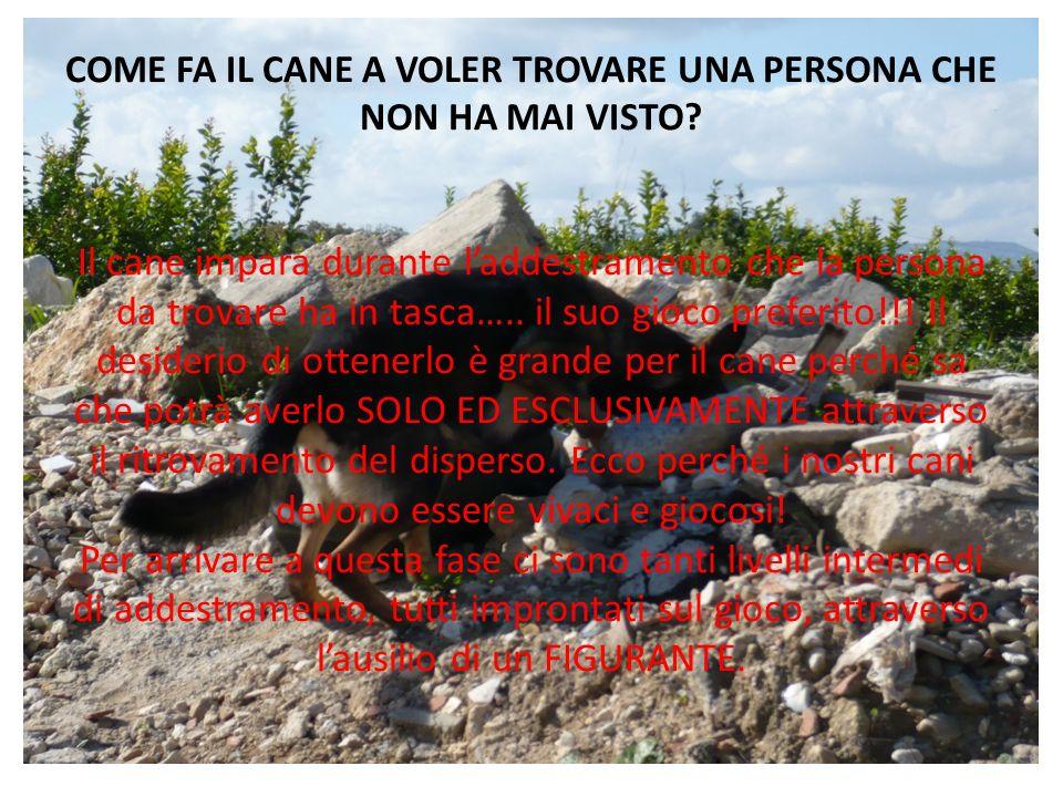 COME FA IL CANE A VOLER TROVARE UNA PERSONA CHE NON HA MAI VISTO
