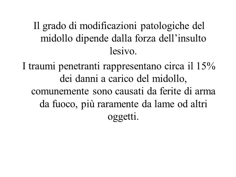Il grado di modificazioni patologiche del midollo dipende dalla forza dell'insulto lesivo.
