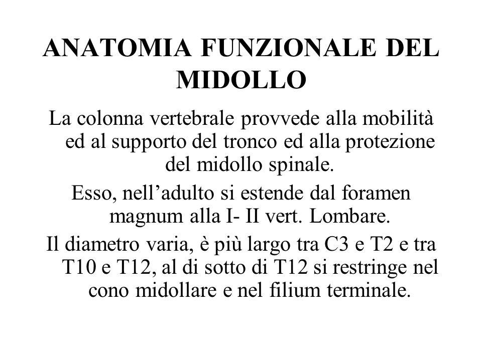 ANATOMIA FUNZIONALE DEL MIDOLLO