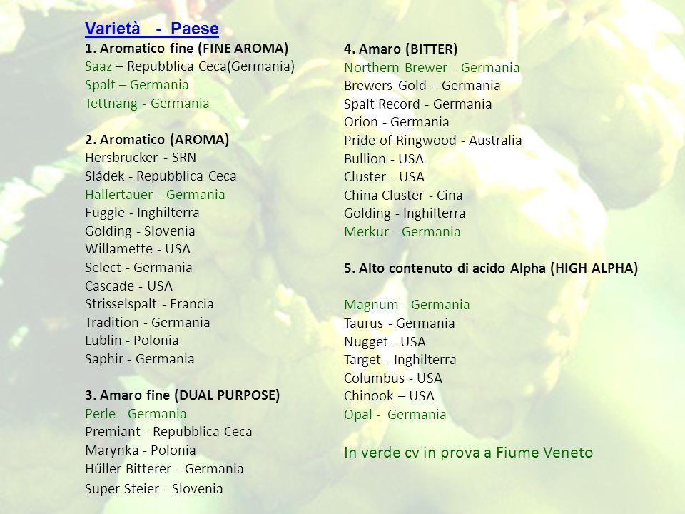 In verde cv in prova a Fiume Veneto
