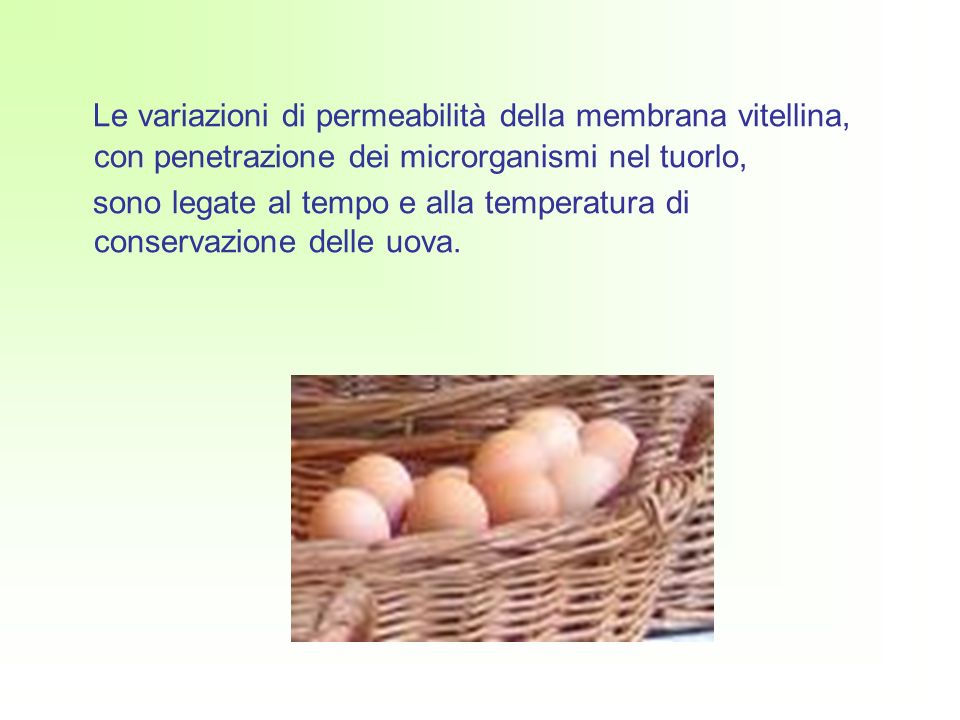 Le variazioni di permeabilità della membrana vitellina, con penetrazione dei microrganismi nel tuorlo,