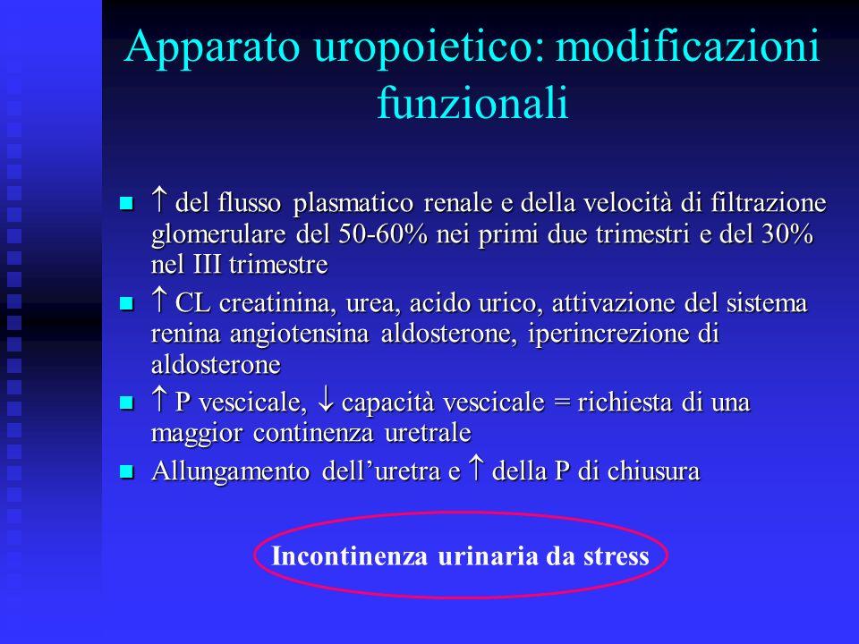 Apparato uropoietico: modificazioni funzionali