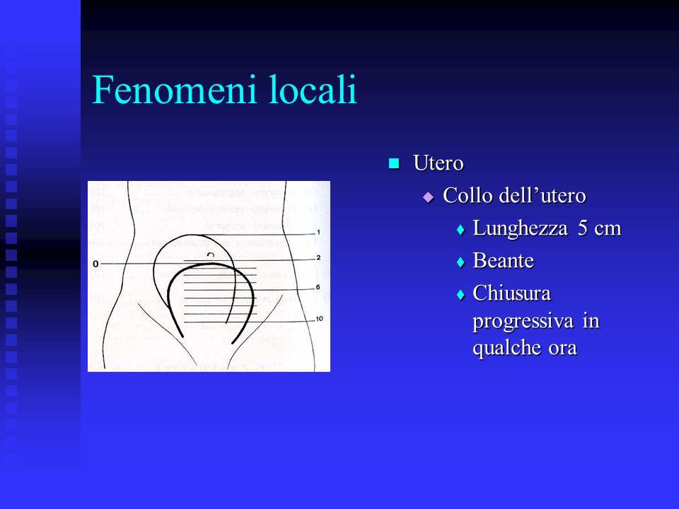 Fenomeni locali Utero Collo dell'utero Lunghezza 5 cm Beante