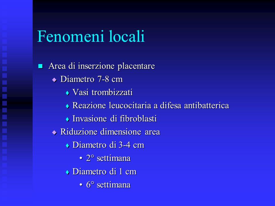 Fenomeni locali Area di inserzione placentare Diametro 7-8 cm
