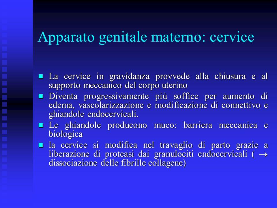 Apparato genitale materno: cervice