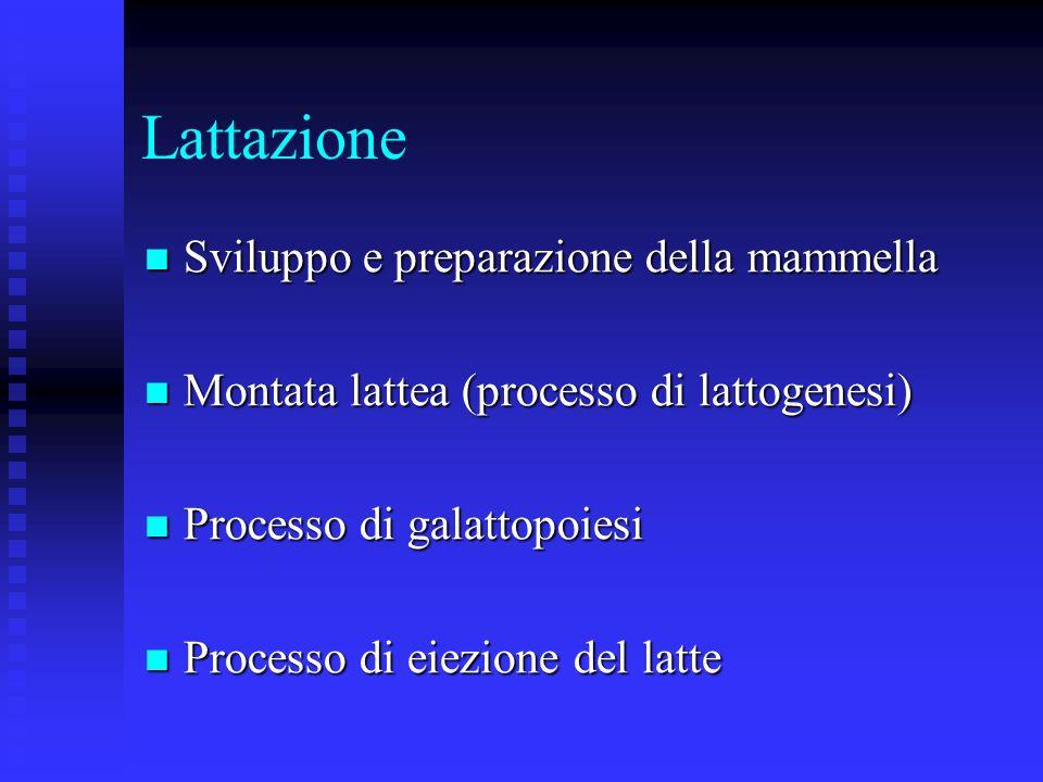 Lattazione Sviluppo e preparazione della mammella