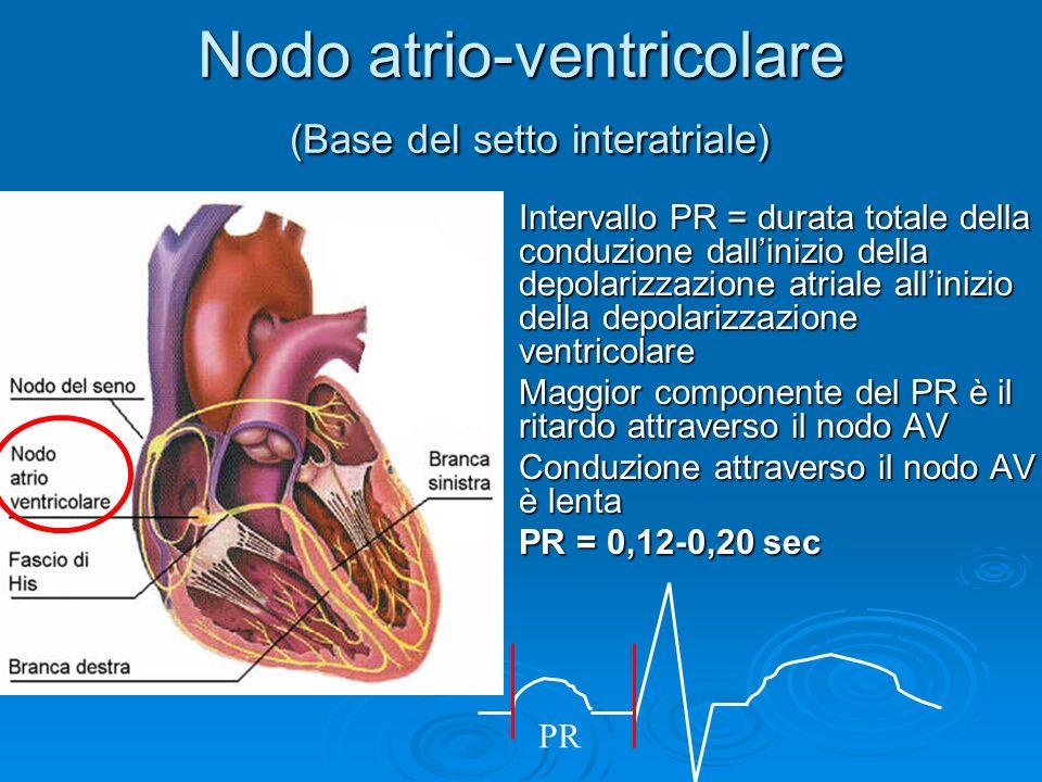 Nodo atrio-ventricolare (Base del setto interatriale)