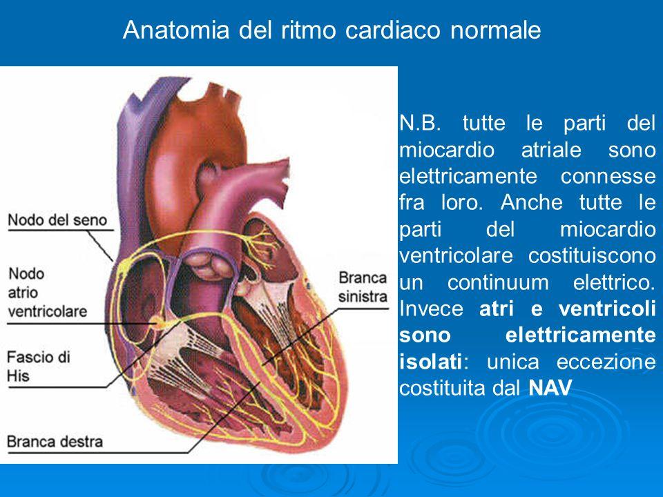 Anatomia del ritmo cardiaco normale