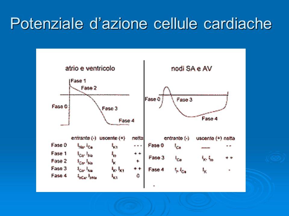 Potenziale d'azione cellule cardiache