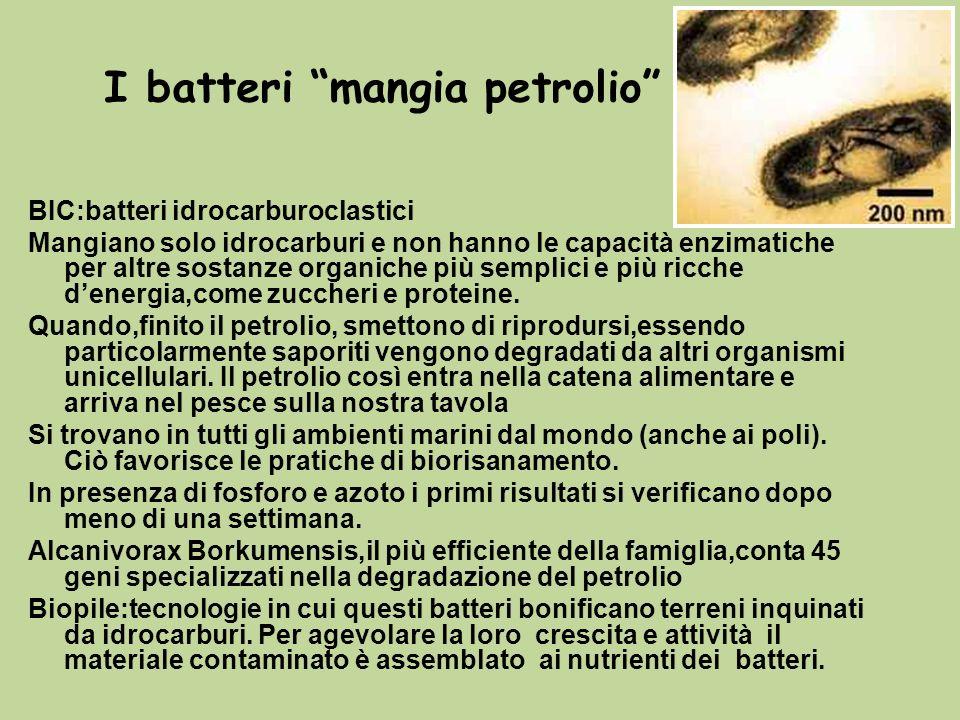 I batteri mangia petrolio
