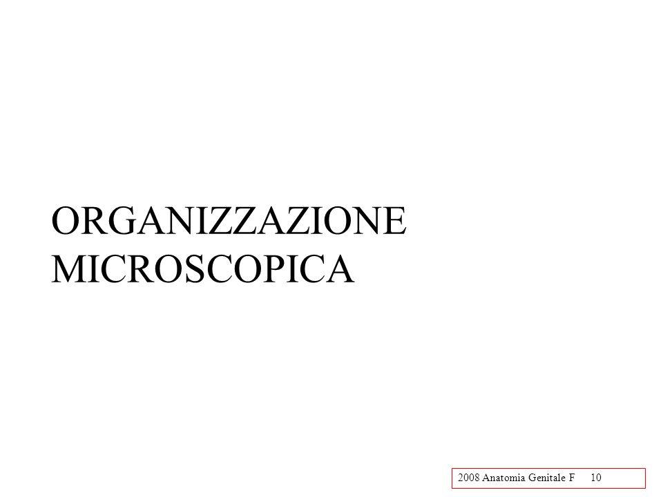 ORGANIZZAZIONE MICROSCOPICA