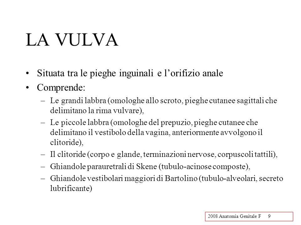 LA VULVA Situata tra le pieghe inguinali e l'orifizio anale Comprende: