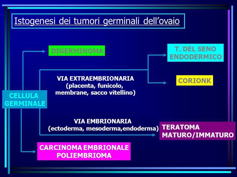 membrane, sacco vitellino) (ectoderma, mesoderma,endoderma)