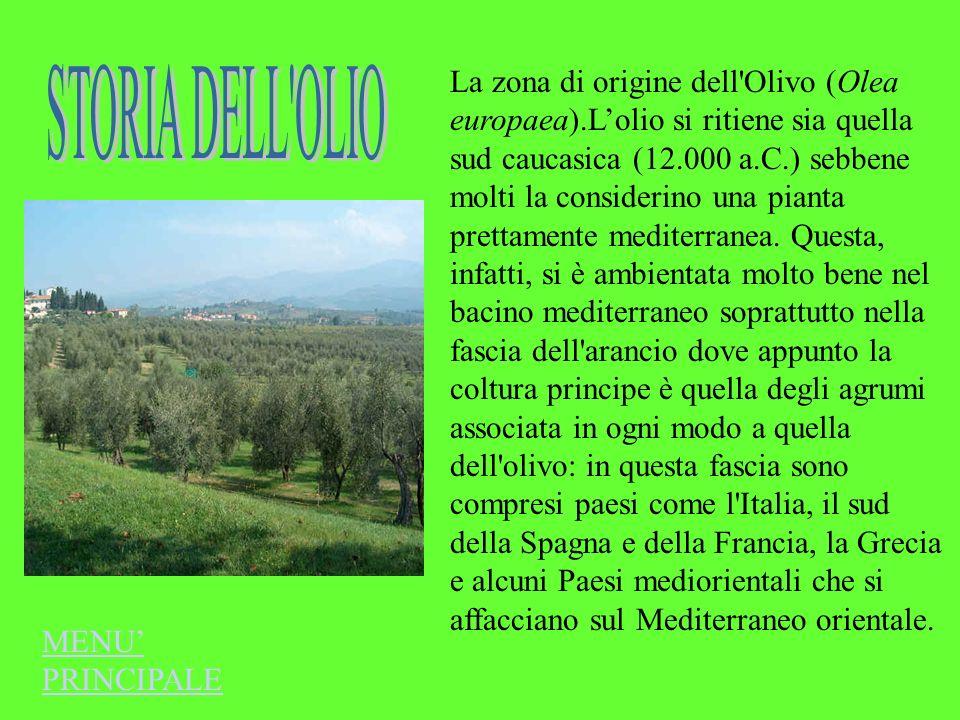 La zona di origine dell Olivo (Olea europaea)
