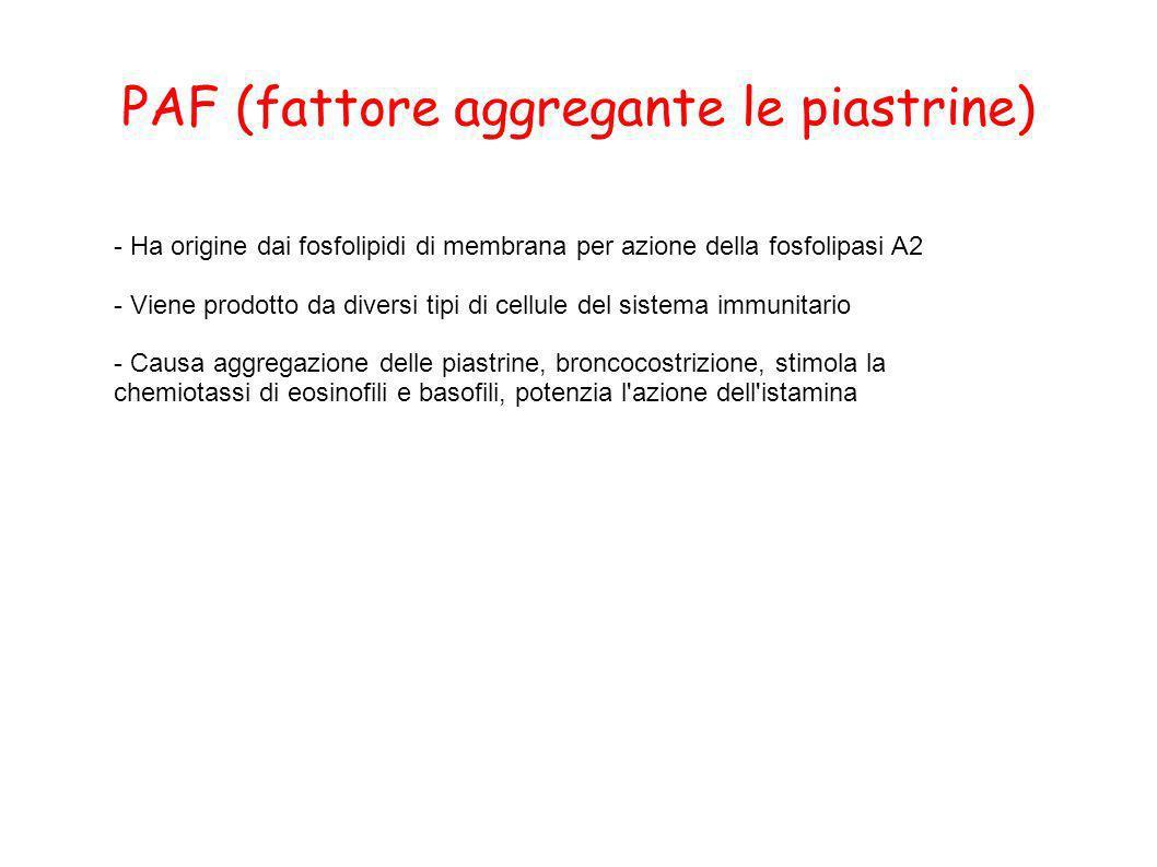 PAF (fattore aggregante le piastrine)