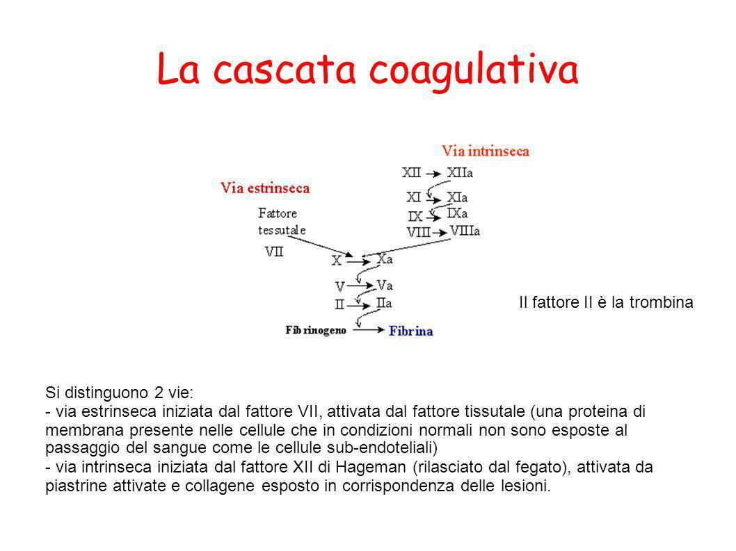 La cascata coagulativa