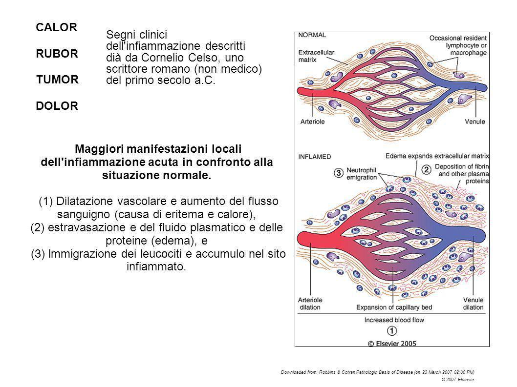 (2) estravasazione e del fluido plasmatico e delle proteine (edema), e