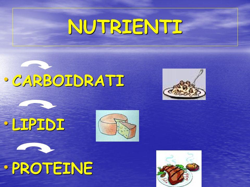 NUTRIENTI CARBOIDRATI LIPIDI PROTEINE