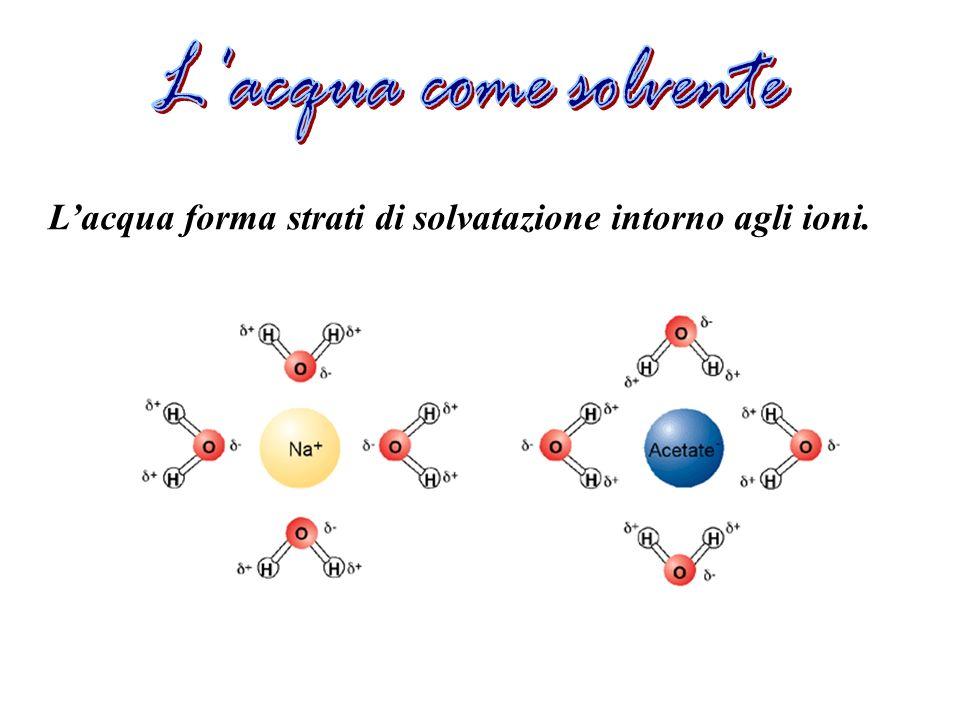 L acqua come solvente L'acqua forma strati di solvatazione intorno agli ioni.