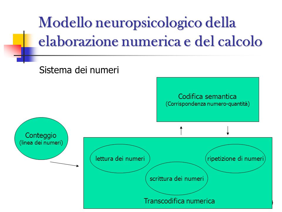 Modello neuropsicologico della elaborazione numerica e del calcolo