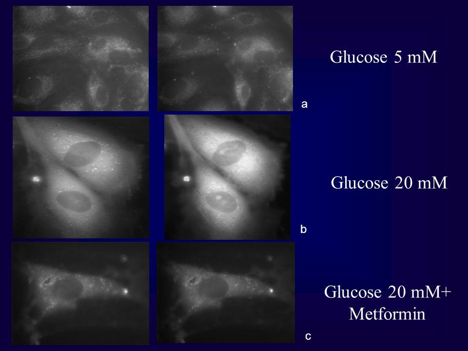 Glucose 5 mM a Glucose 20 mM b Glucose 20 mM+ Metformin c