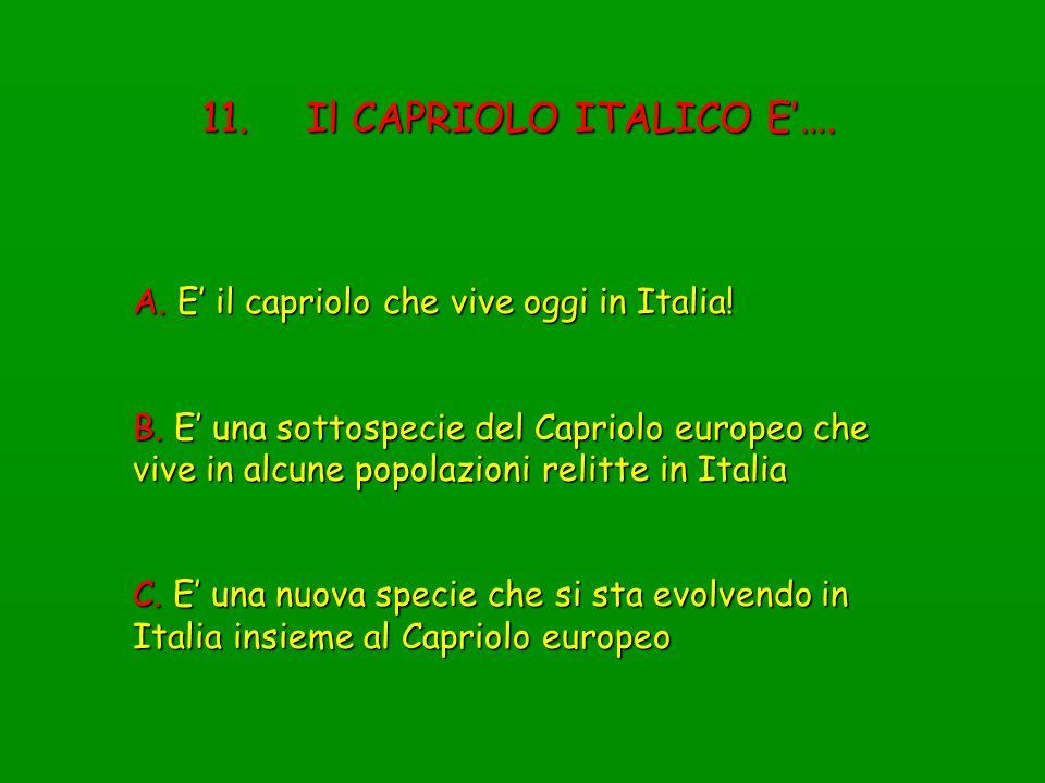 11. Il CAPRIOLO ITALICO E'….