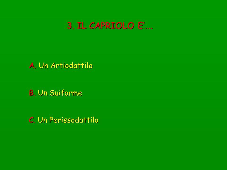 3. IL CAPRIOLO E'…. A. Un Artiodattilo B. Un Suiforme