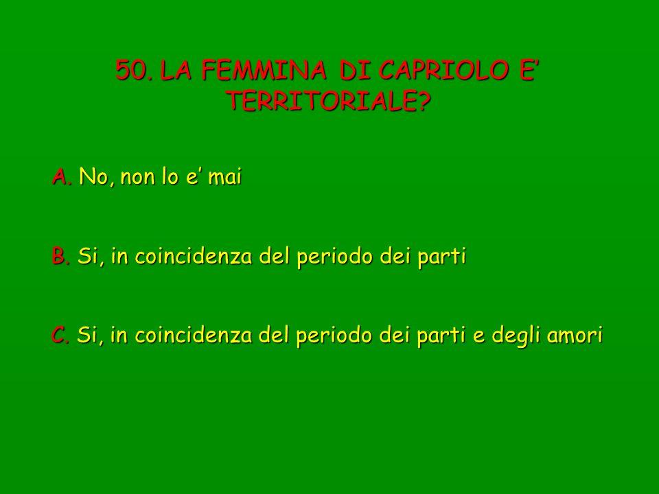 50. LA FEMMINA DI CAPRIOLO E' TERRITORIALE