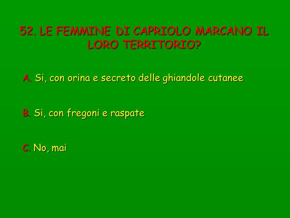 52. LE FEMMINE DI CAPRIOLO MARCANO IL LORO TERRITORIO