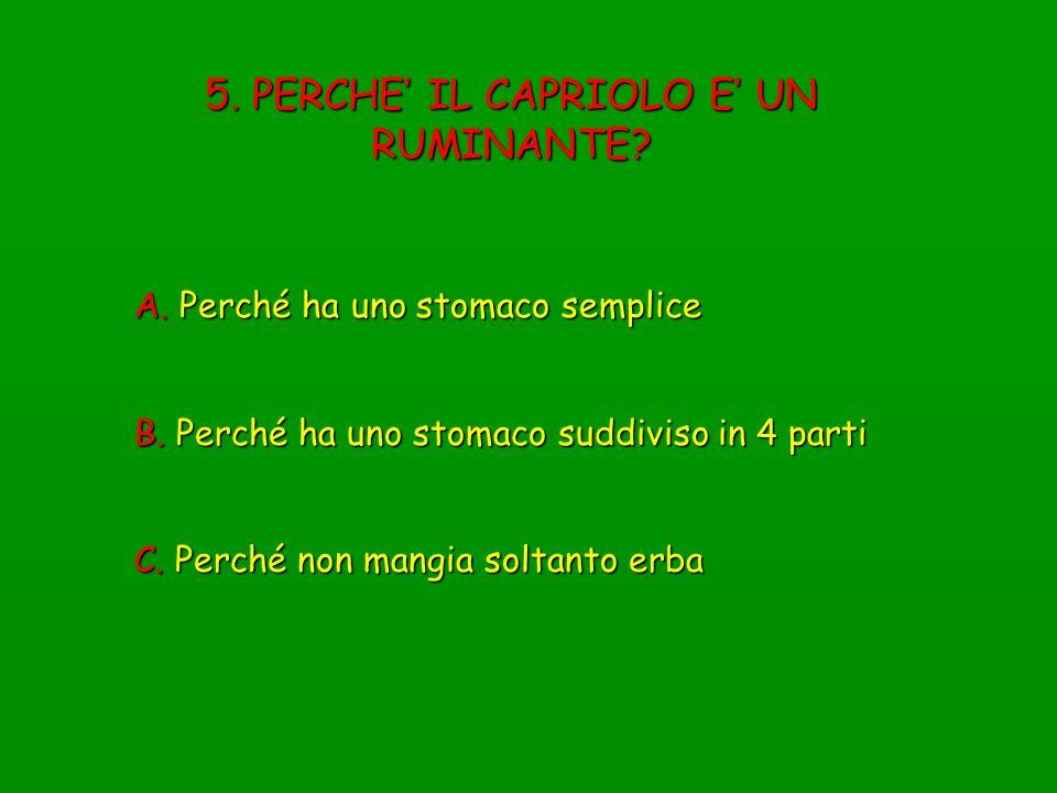 5. PERCHE' IL CAPRIOLO E' UN RUMINANTE