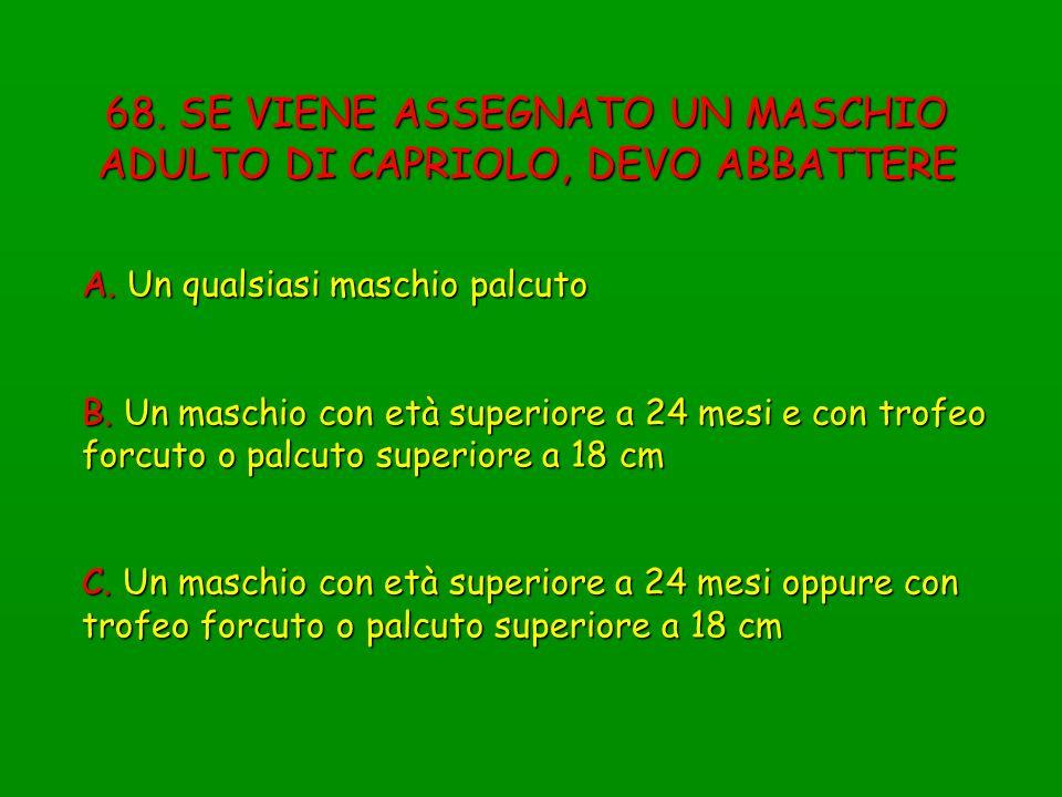 68. SE VIENE ASSEGNATO UN MASCHIO ADULTO DI CAPRIOLO, DEVO ABBATTERE