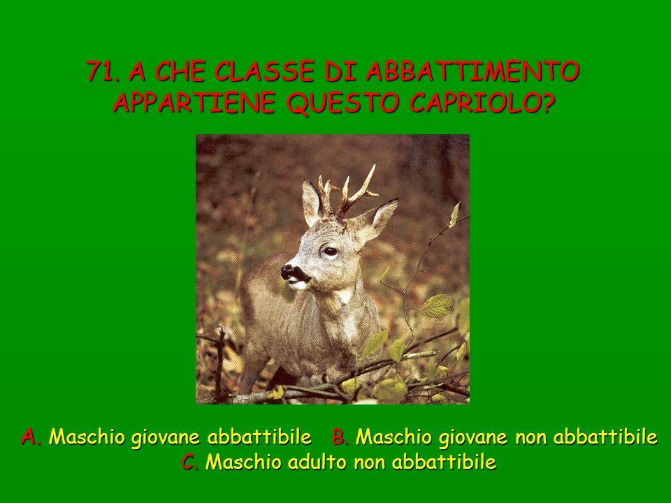 71. A CHE CLASSE DI ABBATTIMENTO APPARTIENE QUESTO CAPRIOLO