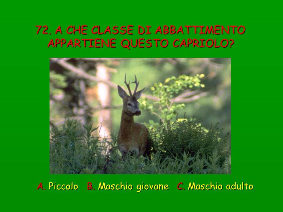 72. A CHE CLASSE DI ABBATTIMENTO APPARTIENE QUESTO CAPRIOLO