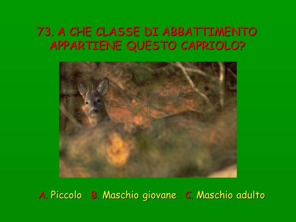 73. A CHE CLASSE DI ABBATTIMENTO APPARTIENE QUESTO CAPRIOLO