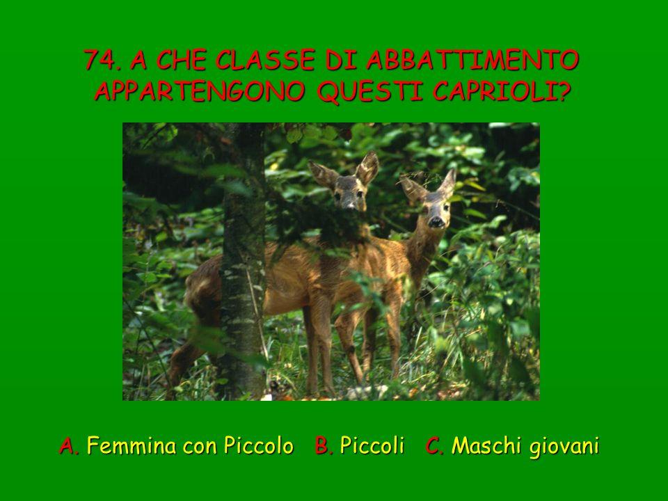 74. A CHE CLASSE DI ABBATTIMENTO APPARTENGONO QUESTI CAPRIOLI