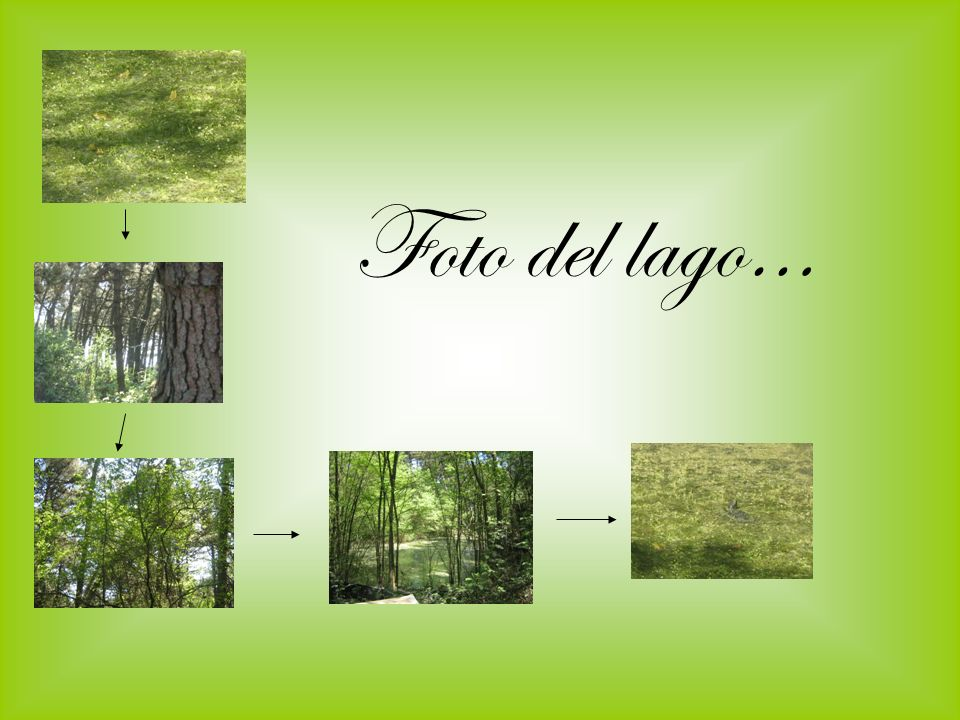 Foto del lago…