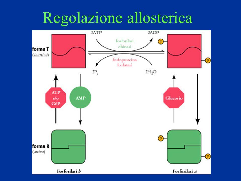 Regolazione allosterica