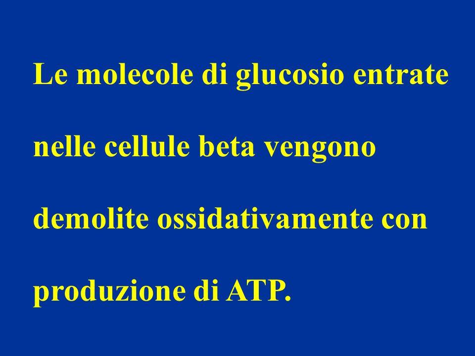 Le molecole di glucosio entrate nelle cellule beta vengono demolite ossidativamente con produzione di ATP.