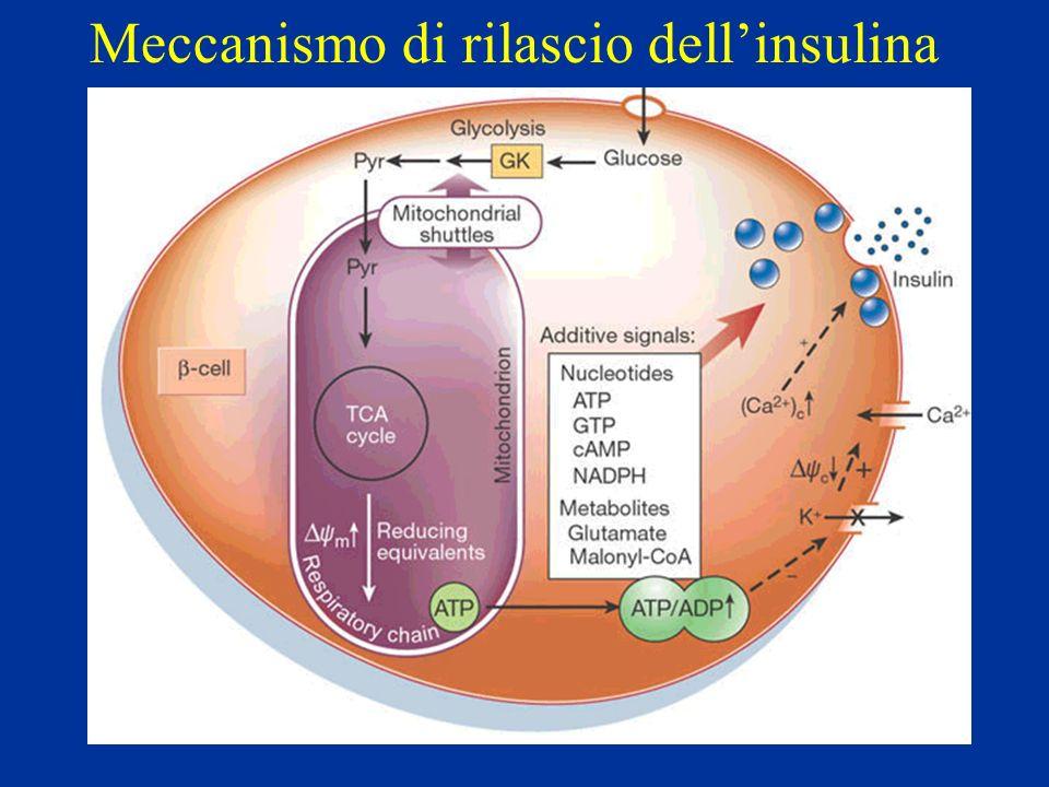 Meccanismo di rilascio dell'insulina