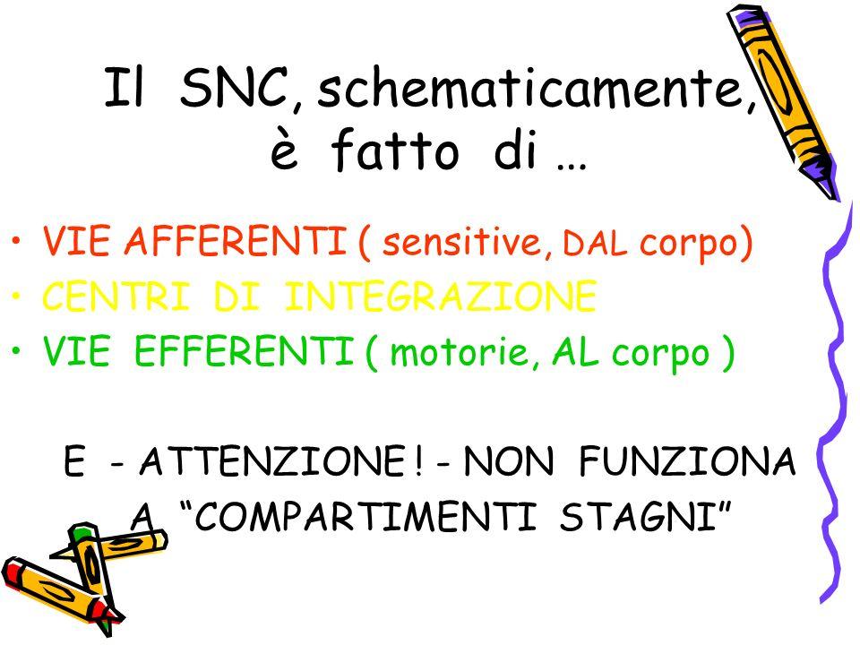 Il SNC, schematicamente, è fatto di …