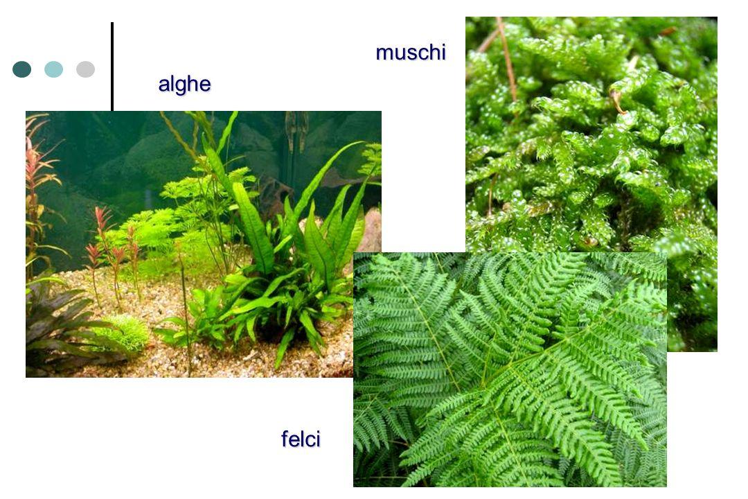 muschi alghe felci
