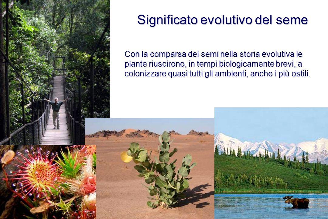 Significato evolutivo del seme