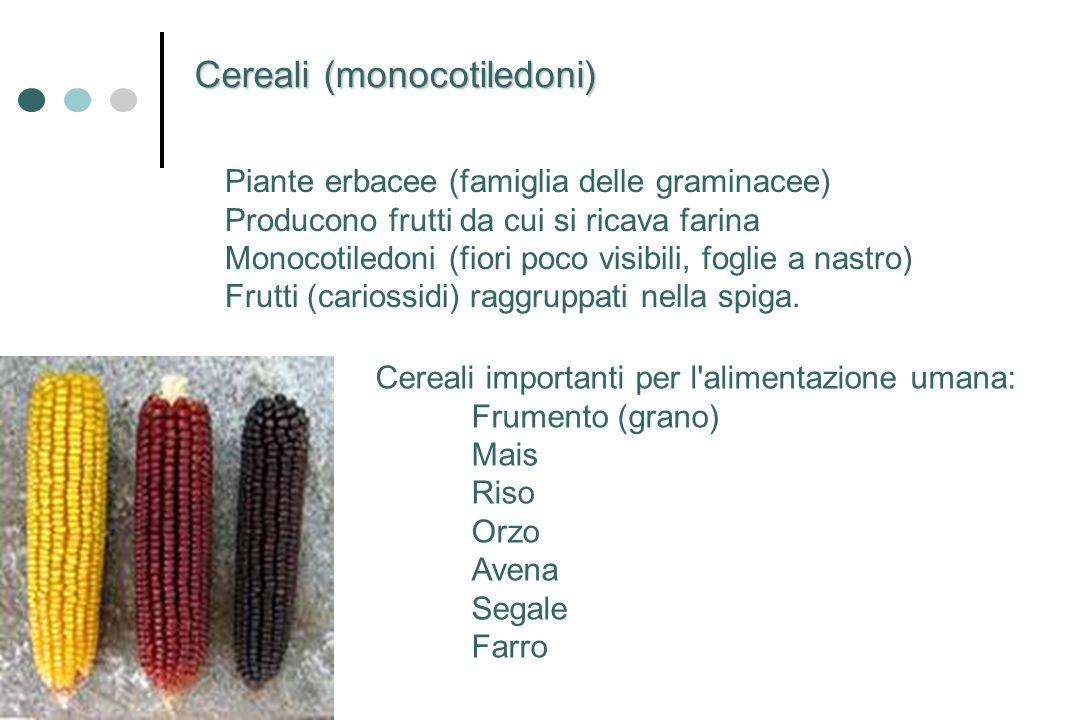 Cereali (monocotiledoni)