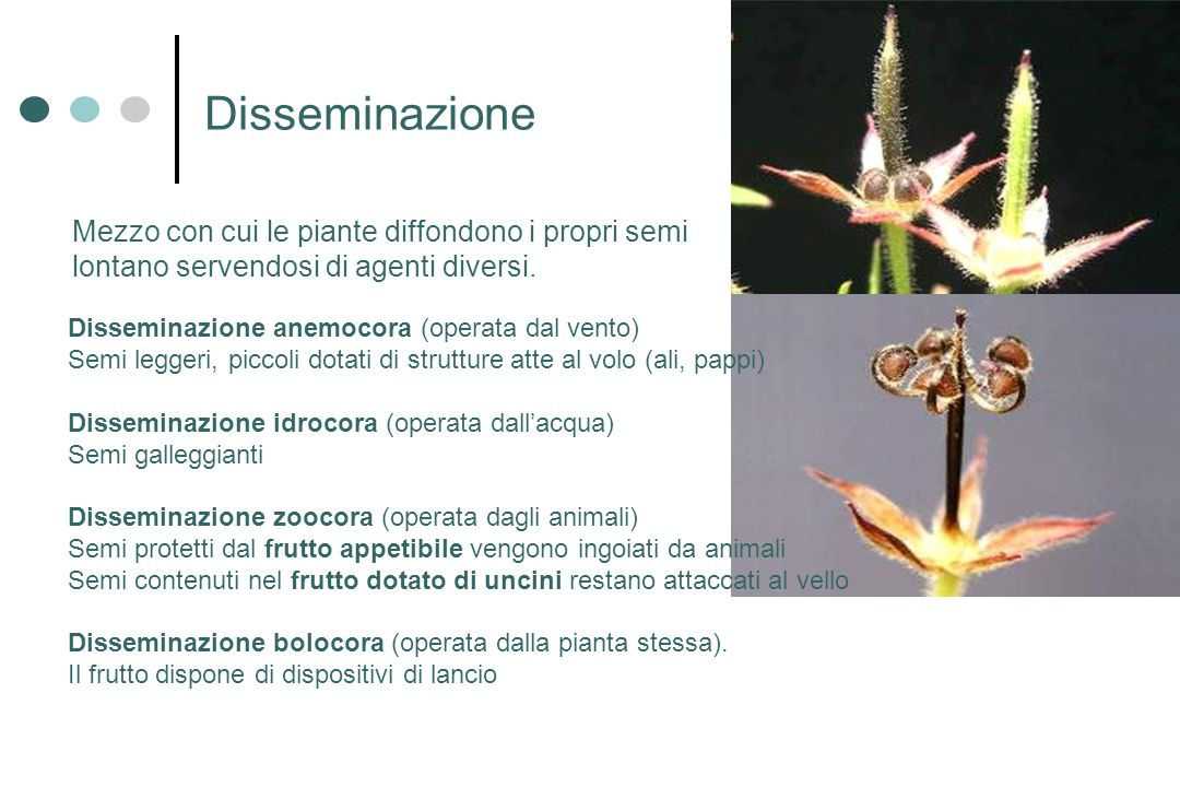 Disseminazione Mezzo con cui le piante diffondono i propri semi lontano servendosi di agenti diversi.