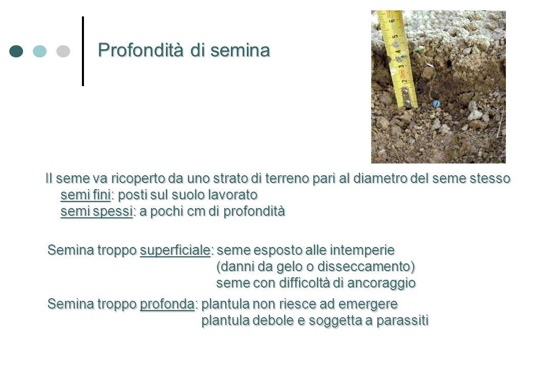 Profondità di semina Il seme va ricoperto da uno strato di terreno pari al diametro del seme stesso.