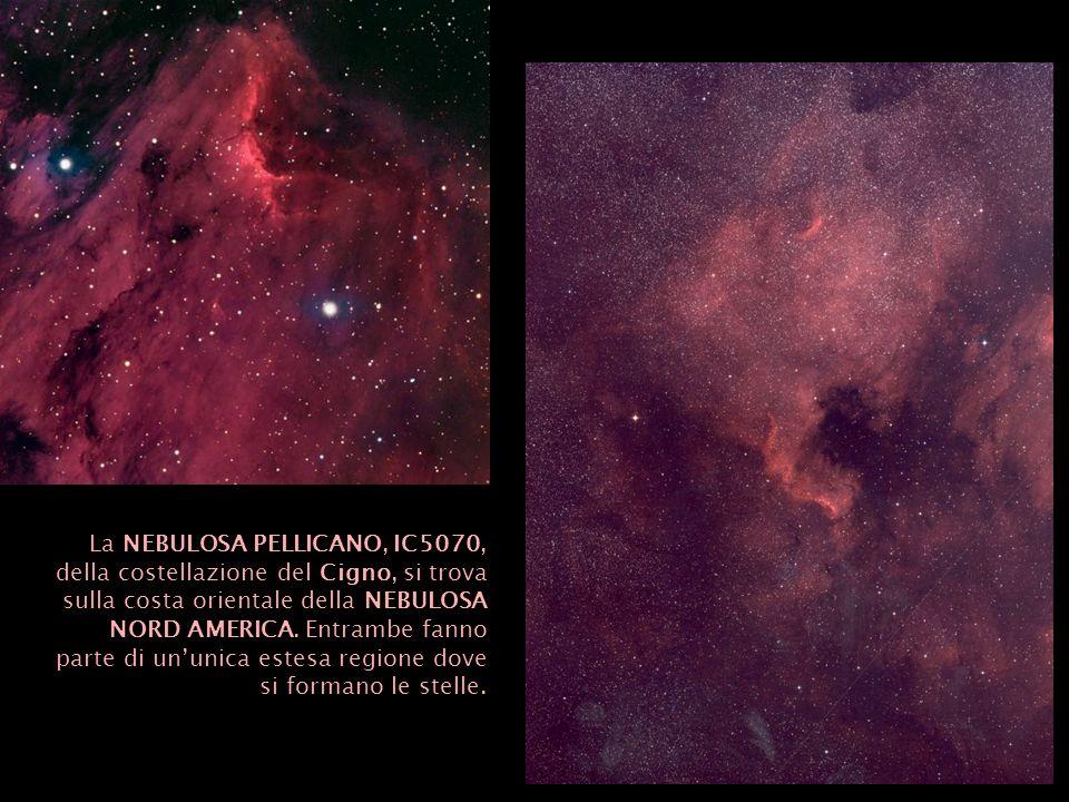 La NEBULOSA PELLICANO, IC5070, della costellazione del Cigno, si trova sulla costa orientale della NEBULOSA NORD AMERICA.